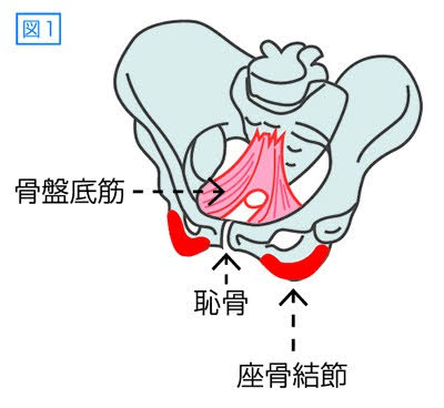 尿漏れの原因